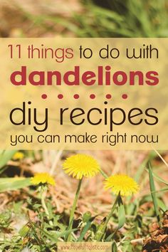 Dandelions are an amazing plant- every piece is useful and good for you! Learn about some things you can make using the dandelions you find in your backyard. Find recipes for salves, mead, soap, and more!