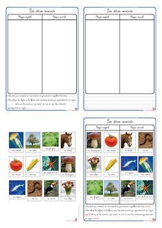 Une petite fiche de leçon à destination des GS et des CP pour aborder la différence entre animal et végétal.