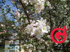 Spaanse Bijenpollen zijn de meest krachtige en zuiverste pollen verkrijgbaar! - Blog   Goji Superfoods
