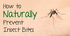 Insect repellents containing picaridin or oil of lemon eucalyptus worked better than DEET at repelling insects. http://articles.mercola.com/sites/articles/archive/2015/05/25/natural-insect-repellents.aspx