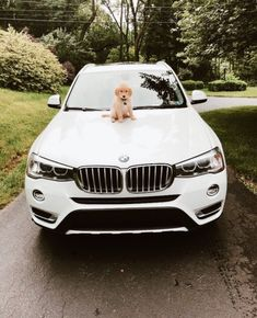 Puppy with a brand new white BMW car? I'll take that anyDAY! Cute Baby Animals, Animals And Pets, Funny Animals, My Dream Car, Dream Cars, Porsche 911 R, Cute Puppies, Cute Dogs, Lux Cars