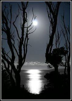 dangel799:  Marvellous Night For A Moondance - Jervis Bay Australia by down the rabbit hole :)