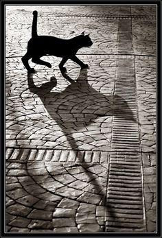 Beautiful Shadow Effects