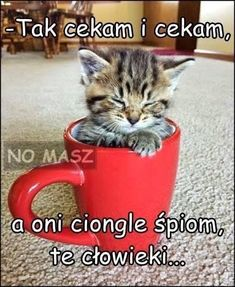 Cute Memes, Funny Memes, Happy Photos, Night Quotes, Cats And Kittens, Funny Cats, Animals, Pictures, Words