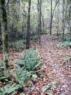Atlanta State Park Trail