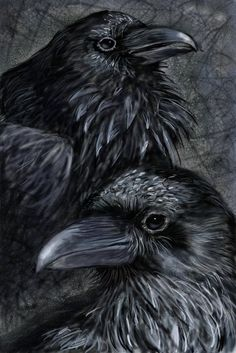 Hugin and Munin by Amy L. Rawson. Left arm will stay in theme with celtic and norse mythology images, symbols. On the look out on how to incorporate Odin's eye overlooking hugin and munin (whose names will be spelled in Elder Futhark).