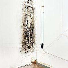 Nettoyer les moisissures
