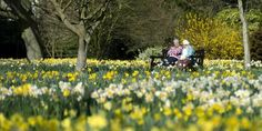 Over half of people aged 65 and over do not complain of problems in health and social care because they feared for their future treatment, according to a UK government study. Silent Majority, Health Care, Country Roads, World, Study, Magazine, Future, News, Gardens