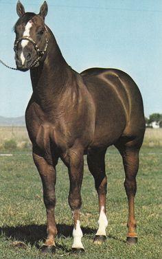 BEAU BONANZA - AQHA Honor Roll Halter Stallion 1971. AQHA Champion.