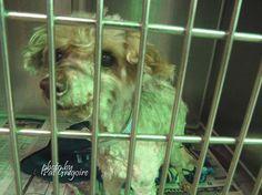 Senior dog waiting at animal control for owner who remains at large