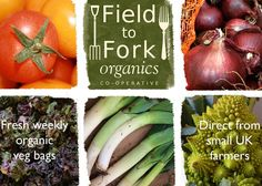 Field to Fork: Local, organic & affordable veg bag scheme in NW London