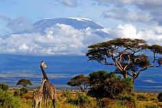 Kilimangaro