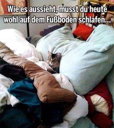 Tja Katzen haben Personal