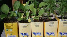 Kräuter ziehen im Tetrapak  Kräuter nur aus der Kühltheke? Von wegen: In diesem Sommer heißt es Selbermachen. Die Berliner Prinzessinnengärtner erklären, wie man Minze oder Salbei in Tetrapaks auf dem Balkon anbaut