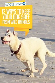 Scared of everything that can hurt your dog outside your home? Be prepared. Here's 12 ways to keep your dog safe from wild animals. quick halloween snacks, halloween snack recipes, halloween snacks and treats Pet Sitter, Dog Care Tips, Pet Care, Dog Safety, Yorkshire Terrier Puppies, Dog Barking, Dog Hacks, Dog Training Tips, Training Videos