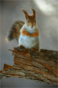 A 78-year-old UK woman accused her neighbour of training a squirrel to destroy her garden.