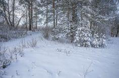 Зимний пейзаж на берегу канала имени Москвы.Россия.(фото №32)