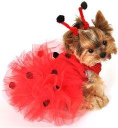 Halloween Dog Costumes Ladybug Tutu