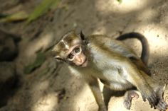 Why I became an #ecologist - a life in #science, now with #monkeys :)
