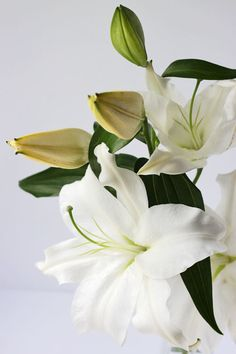Lilies..Take that back.. the plain white ones are my absolute favorite.. so pure.