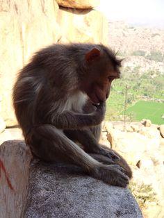 Monkey temple, Hampi, India.