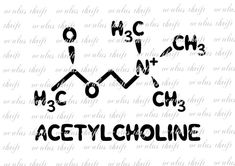 Acetylcholine The Memory Molecule SVG - Silhouette Cut File - Molecule Tattoo - Best Garden Design - DIY Home Accessories - Auburn Hair Styles - DIY Jewelry Inspiration Life Tattoos, New Tattoos, Tatoos, Chemistry Tattoo, Whatever Forever, Name Plaques, Silhouette Studio Designer Edition, Cutting Files, Tattoo Quotes