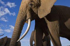 Samburu Elephants - Northern Kenya