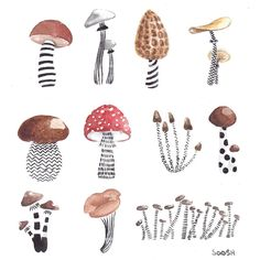 This is the time to introduce you, dear reader, to the work of this Russian lady living in Ukraine, her nickname is Soosh and we are blown by her amazing and delicate and poetic pencil. Mushroom Drawing, Mushroom Art, Botanical Illustration, Illustration Art, Illustrations, Illustration Inspiration, Graphic, Art Inspo, Painting & Drawing