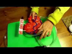 !!!KIDNEY MODEL AND FUNCTION!!! (KIDNEY FILTRATION & REABSORPTION) SCIENCE EXPERIMENT - YouTube