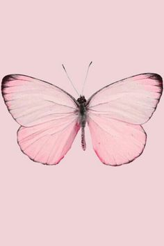Pink so girly so pretty pink litghts up a dark hart Papillon Butterfly, Papillon Rose, Pink Butterfly, Madame Butterfly, Butterfly Tattoos, Butterfly Wings, Pink Love, Pretty In Pink, Perfect Pink