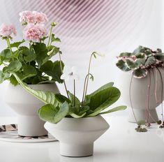 Gardening, Interior, Design, Plant, Garten, Design Interiors, Lawn And Garden, Interiors, Garden