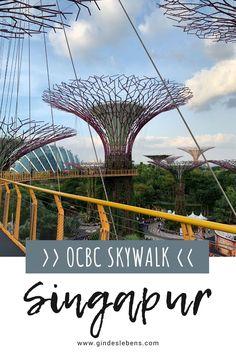OCBC Skyway, eine 128 Meter lange Hängebrücke zwischen zwei der Supertrees. Der Blick ist atemberaubend. Die beliebteste Zeit ist wohl abends, wenn die Sonne untergeht und während der Lichtshow. Wir würden euch empfehlen etwas vorher die Besichtigung zu starten und die Lichtshow dann von unten zu betrachten. Tipps für den OCBC Skywalk. Singapur Sehenswürdigkeiten, und Highlights für 3 Tage auf www.gindeslebens.com #Singapur #SingapurHighlights #OCBCSkywalk #GardensByTheBay #Supertrees Playground Flooring, Diy Playground, Infinity Pools, Plaza Hotel, Gardens By The Bay, Kew Gardens, Ubud, New York City Guide, Luxury Garden Furniture