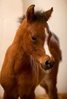 baby horse---if i could just pet him it would be such a happy place