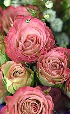 English Roses – we have some David Austin roses – they are beautiful and have wonderful fragrance.