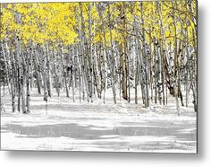 Snowy Aspen Landscape Metal Print by The Forests Edge Photography - Diane Sandoval.  All metal prints are professionally printed, packaged, and shipped within 3 - 4 business days and delivered ready-to-hang on your wall. Choose from multiple sizes and mounting options.
