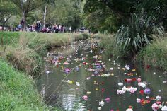 Flower tributes flowing down the Avon River, Christchurch 22 feb 2013, two year anniversary of the earthquake