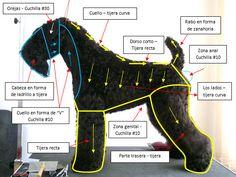 Grooming Kerry blue terrier