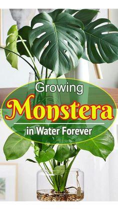Plants Grown In Water, House Plants Decor, Indoor House Plants, Indoor Plant Decor, Tropical House Plants, Best Indoor Plants, Indoor Plants Low Light, Inside Plants, Small Plants