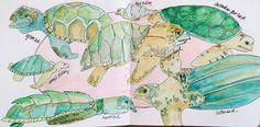 Sea turtles watercolor sketch art journal visual diary