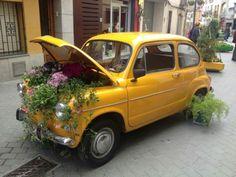 un jardinet curiós. Por: Rosa M Pajuelo Barril