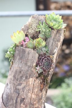 "I made this out of an old tree stem I found in my parents garden. The plants were also in the garden =) sometimes it's like a little fleemarket. I've put moss in the ""open parts"" of the tree stem and then just put the little cut succulents in it. Hope you like it - if anybody is interested I posted some pictures of the process on my tumblr. #succulent #diy"