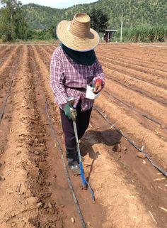 Manual Corn Seeder Garden Tools UT001-S
