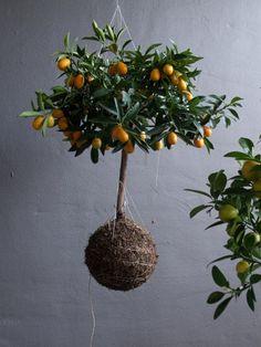Zahrada na niti: Obchůdek, který voní po lese | Proti šedi