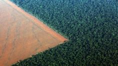 Amazon rain forest bordered by deforested land