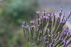 Ethnobotanical Garden at Voyageurs National Park #FindYourPark #NativePlants