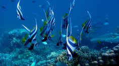 Zanzibar Photo Gallery | KLM Safaris Safari, Aquarium, Photo Galleries, Gallery, Goldfish Bowl, Fish Tank, Aquarius