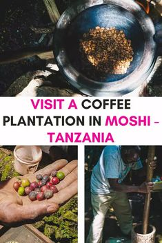 Take a Kilimanjaro Coffee Tour in Moshi: Marangu Coffee Plantations