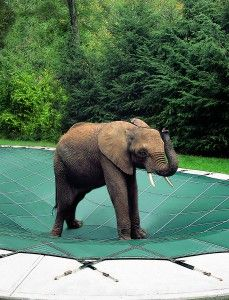 Never a better time to invest in a good quality pool cover! Aqua Leisure Pools, Spa & Fire Shoppes carry Loop Loc http://www.aqualeisurepools.com/pool-spa-covers/