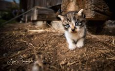 You just have to love these little creatures #catsofinstagram #kittens #petsofinstagram #loveanimals #bigeyes #discover #sigma1020mm #loveisintheair #animalphotographer #catsplaying Love Is In The Air, Big Eyes, Cats Of Instagram, Kittens, Fox, Creatures, Pets, Animales, Cute Kittens