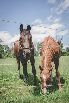 #ringsontheizings Horse & Horse - Whimsical Wedding: woodland, whimsical, fairy tale, summer, outdoors, happily ever after, wildflowers, rustic, horse ranch decor, barn yard Photographer: Hajnal Keszler